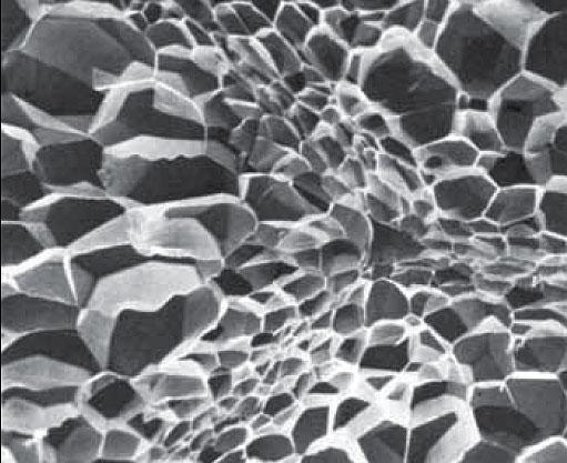 Particolare al microscopio